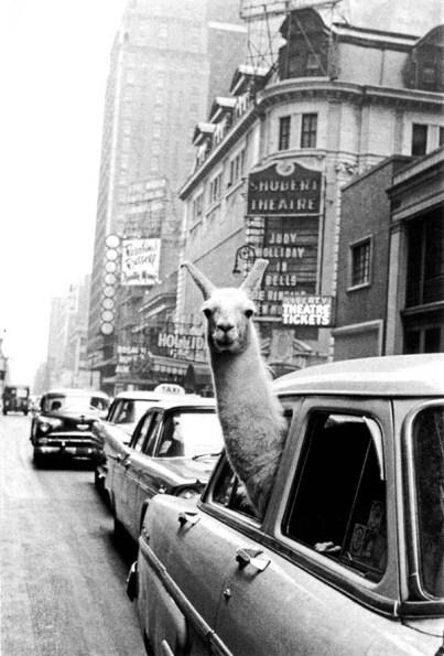 FOTO 5. lama Times Square