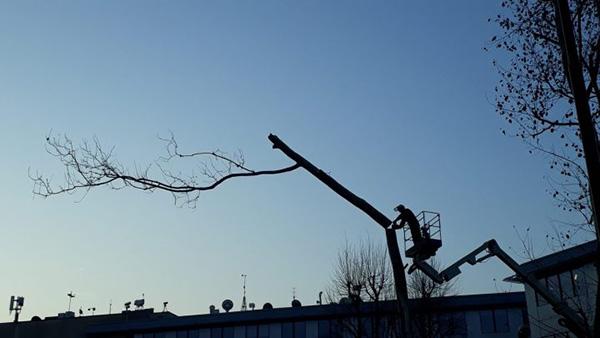 taglio alberi al parco Bassini (credit T. Shmidt)