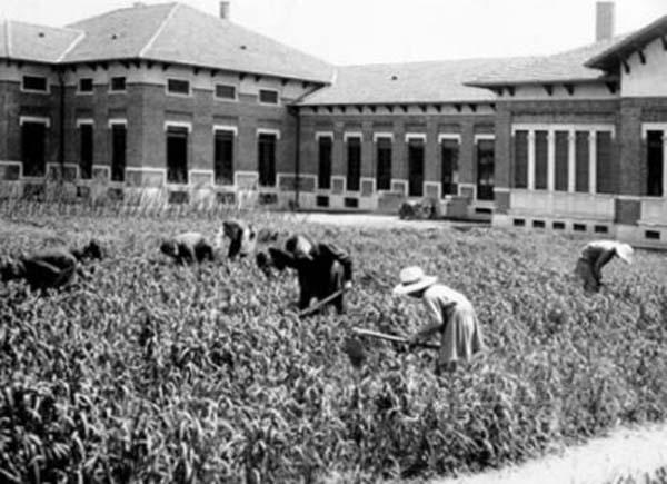 5. La coltivazione